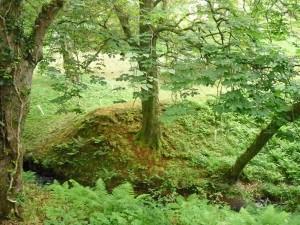 Natures hiding place