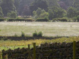 Swaying grass